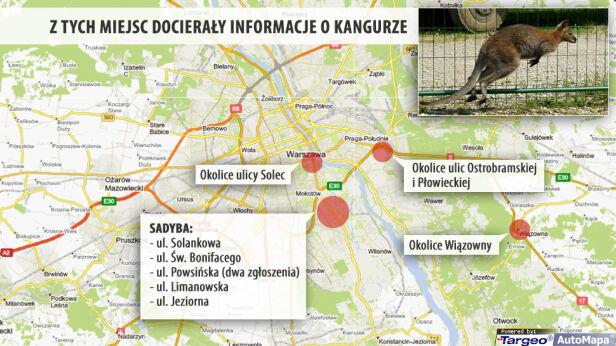 W tych miejscach widziany był kangur tvnwarszawa.pl / targeo.pl