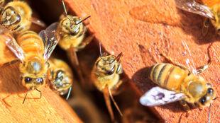 """Pszczoły budzą się do życia. """"Niebezpieczny może być dla nich nagły powrót zimy"""""""