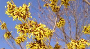 Wiosenny krzew (Kontakt 24/Elżbieta)